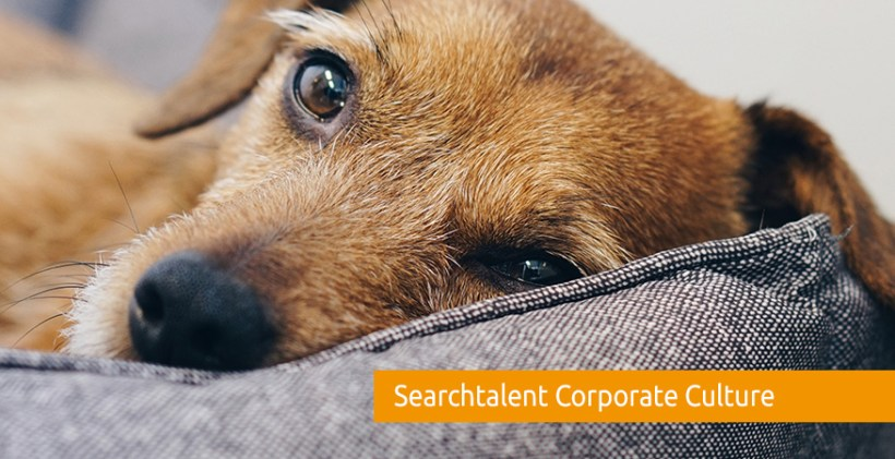 searchtalent-corporate-culture