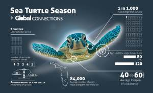sea_turtles_info_revised