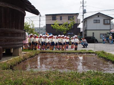 幼稚園児の田植え、行進と整列