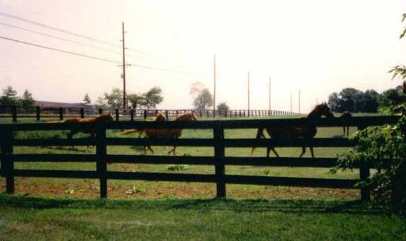 Cycle Trip '94 - Louisiville to Lexington, KY