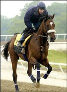 2006 Winner Barbaro - Image (c) http://sportsillustrated.cnn.com