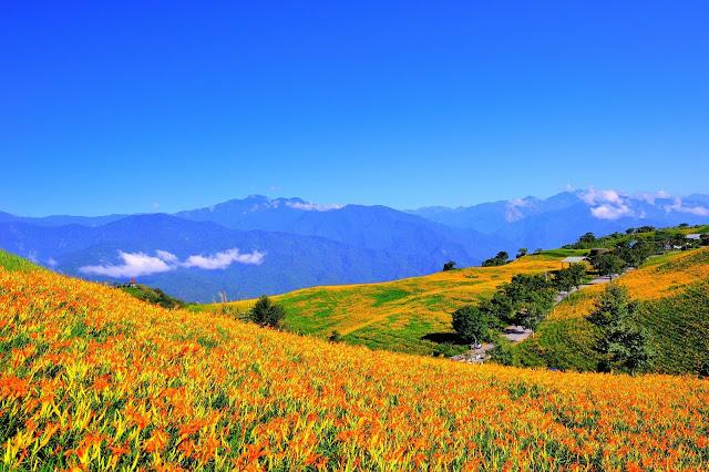 國際級的花季在台灣!每年8~9月是金針花盛開的季節,也是台灣【花東旅遊】重頭戲之一啦!滿山滿谷金針花海,美不勝收!更有「天使的花毯」的美譽,每年不止台灣遊客朝聖,更吸引許多國外旅客蜂擁而至。 | 東南旅遊