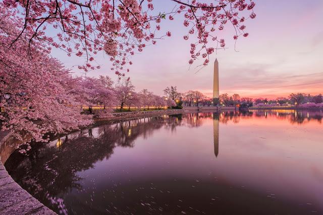 華盛頓賞櫻|東南旅遊