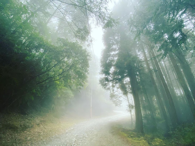 觀霧國家森林遊樂區|東南旅遊