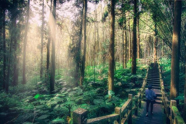 阿里山森林遊樂區|東南旅遊