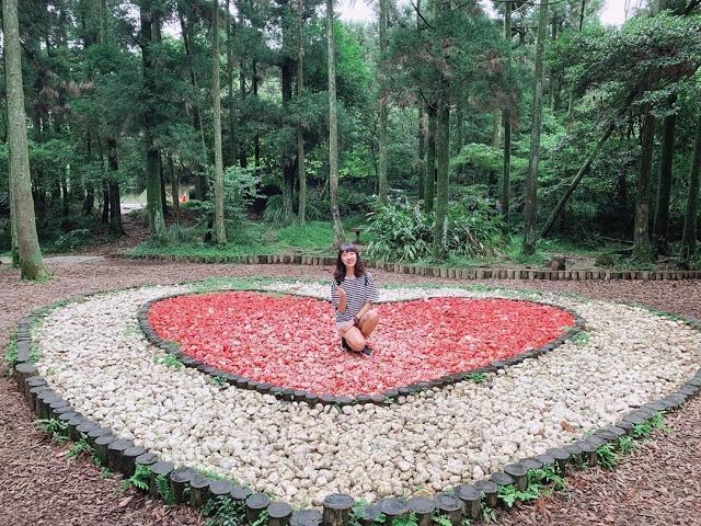 竹子湖黑森林|東南旅遊