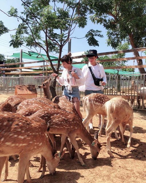 墾丁景點鹿境梅花鹿園|東南旅遊