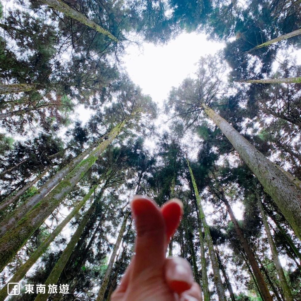 阿里山神木步道|東南旅遊