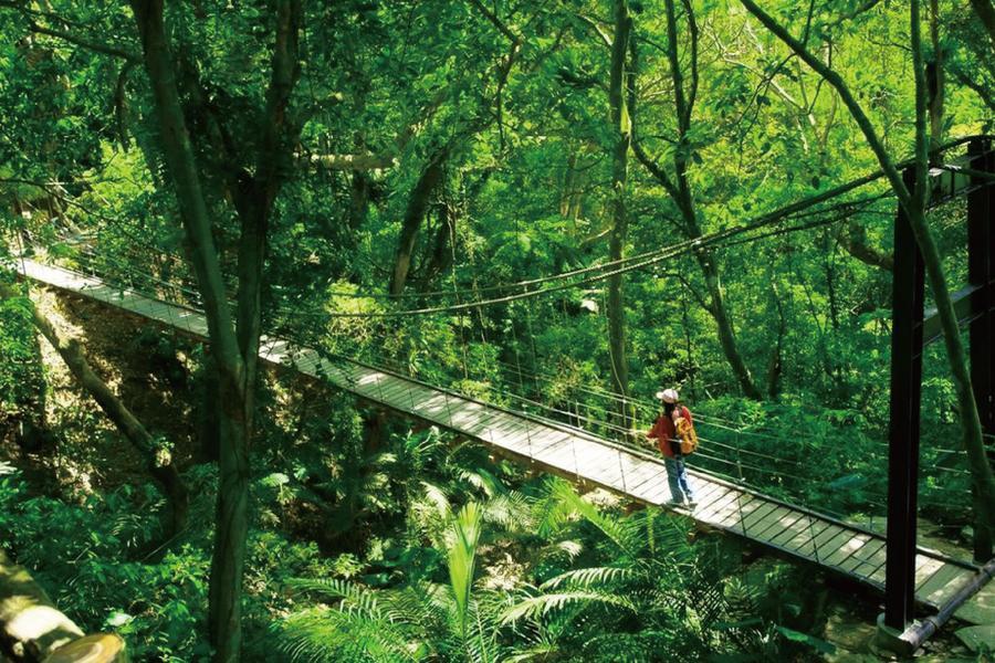 新北大板根森林步道|東南旅遊