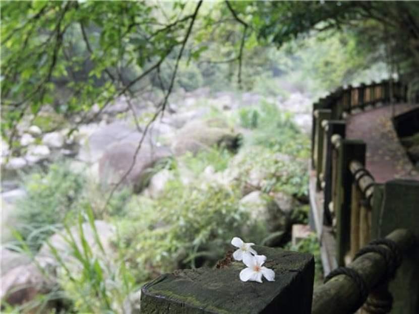 蓬萊溪護魚步道|東南旅遊