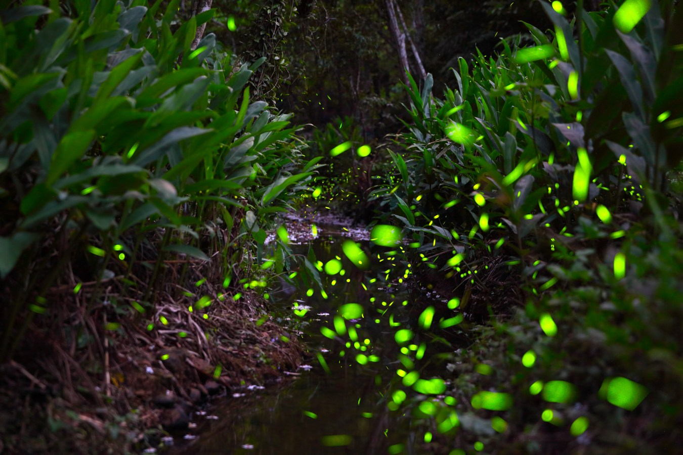 螢火蟲季節| 東南旅遊