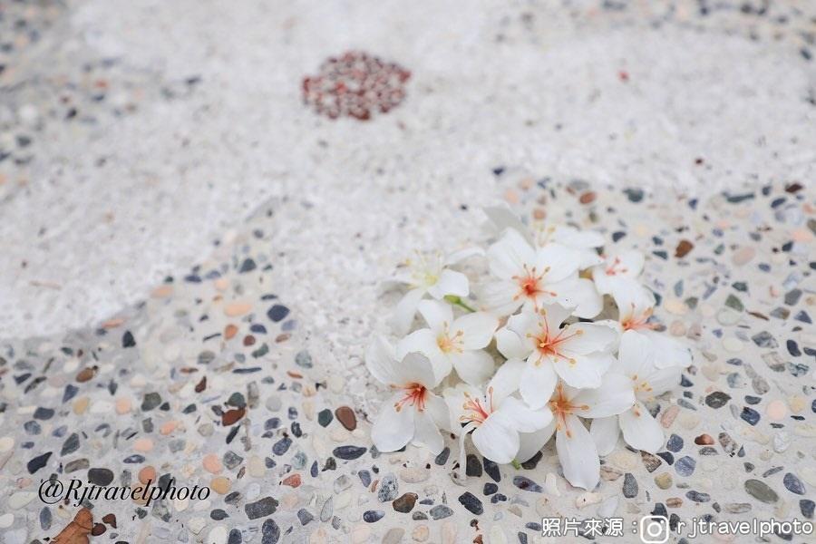 荷苞山桐花公園|東南旅遊