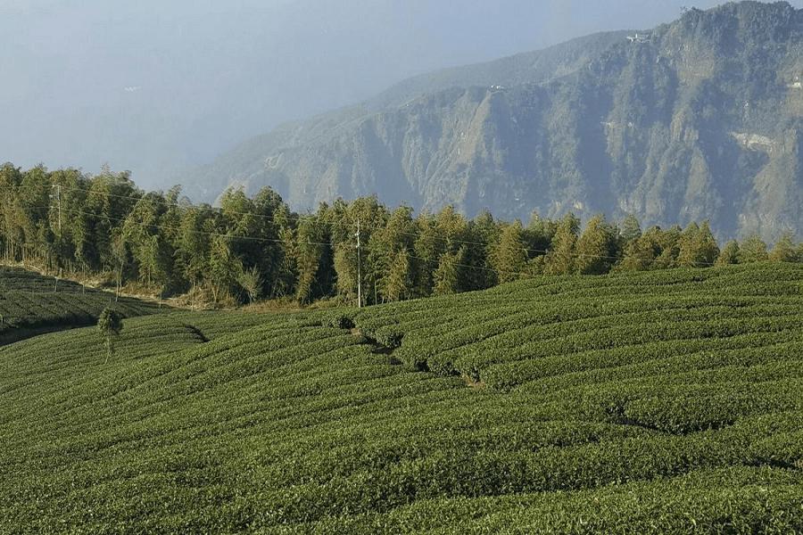 雲嶺之丘|東南旅遊
