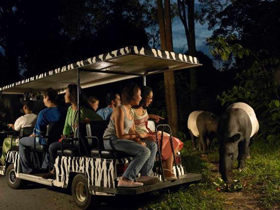 新加坡夜間動物園 東南旅遊