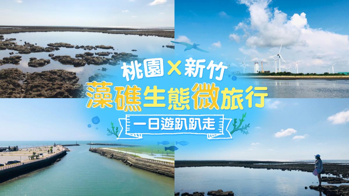 藻礁生態微旅行|東南旅遊