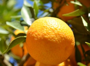Orange amère - bigarade