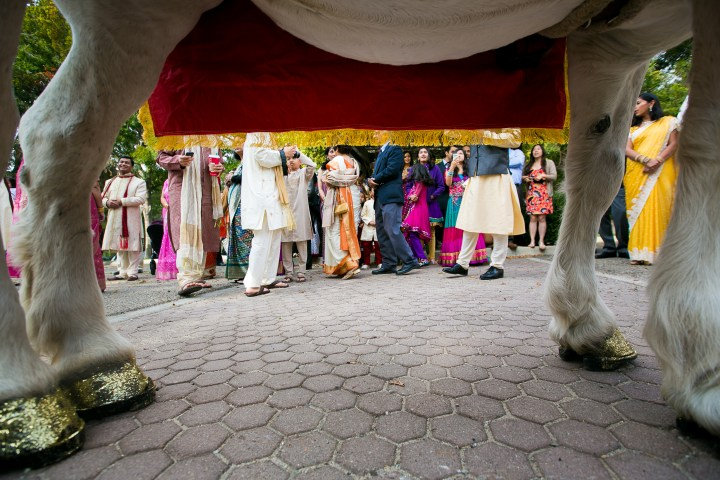Indian wedding, groom's baraat on a horse