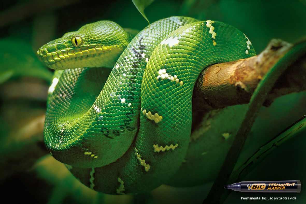 Bic-Snake