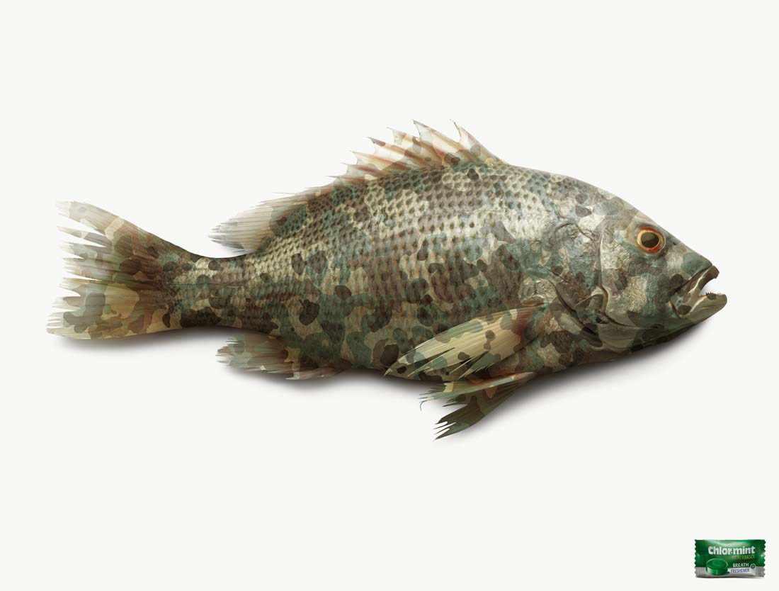 chlormintfish