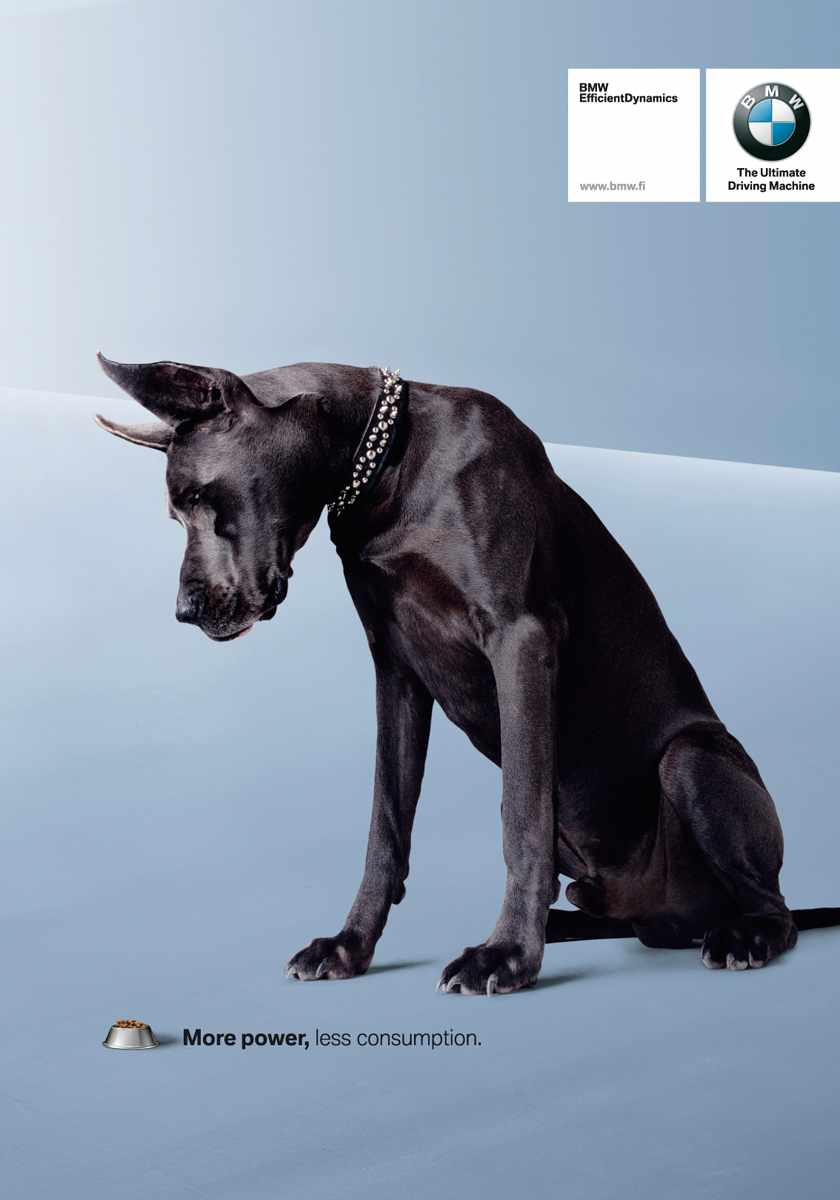 BMWdog