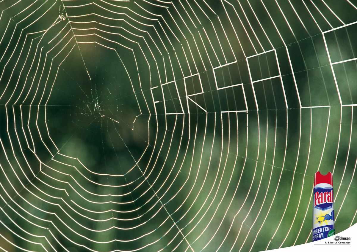 SCJ_Spider