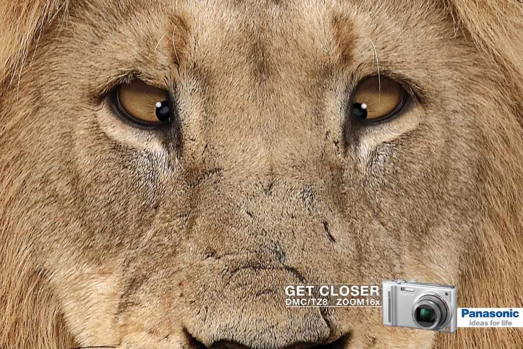 lion_7