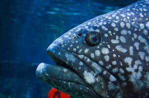 Fisch Aquarium Legoland Billund