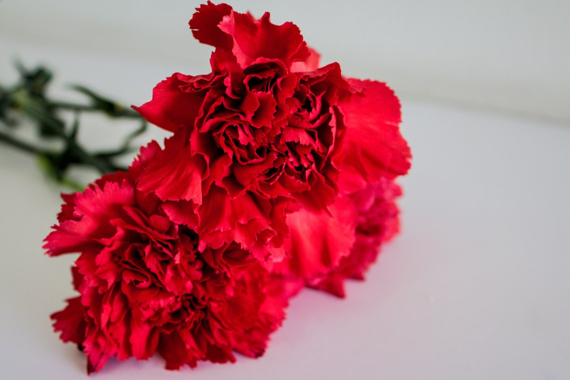 Red carnations resting on white table.