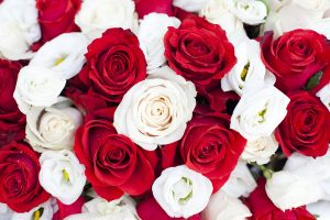 Red and white roses.