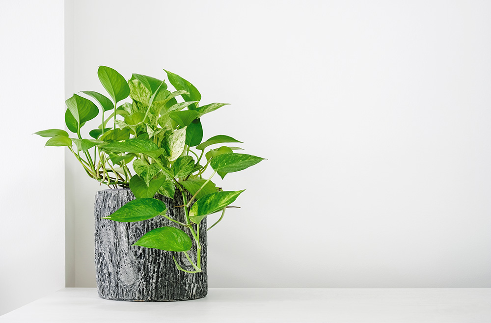 Green plant with gray pot against gray wall