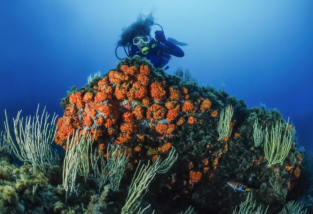 Diver exploring coral reef.