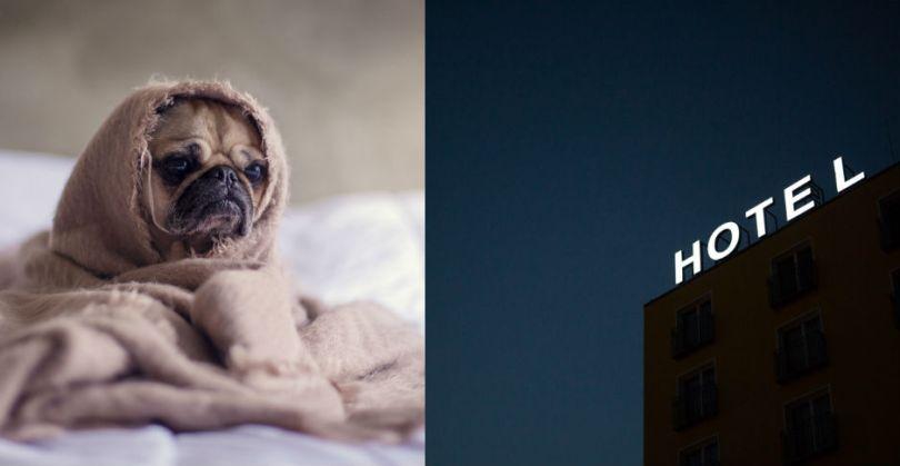 perro y cartel de hotel