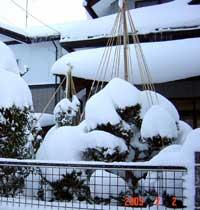snow222.jpg