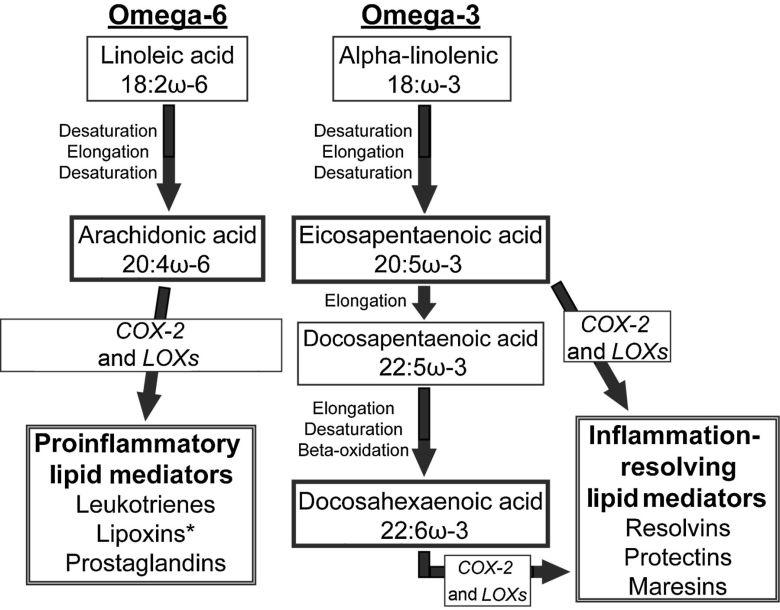 Omega-6-Omega-3 Summary