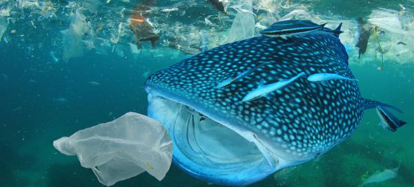 animales victimas plastico
