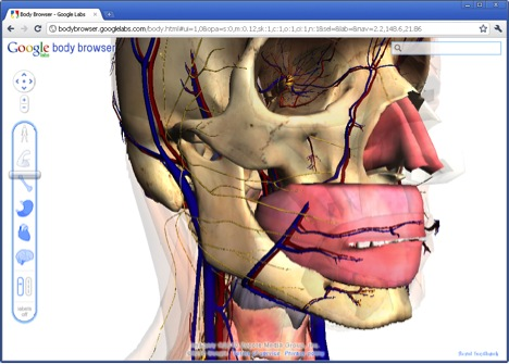 Google Body - 3D view of our body | SiSQ Tech