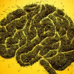 Cannabis e psicosi