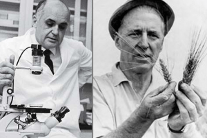 Hilleman (left) and Borlaug (right) together have saved more lives than anyone else in human history.