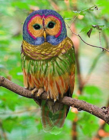 rainbow_owl_large