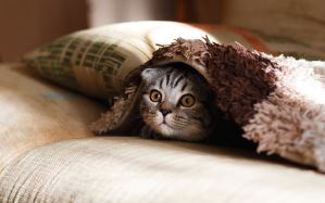 Tenants breaking pet policies