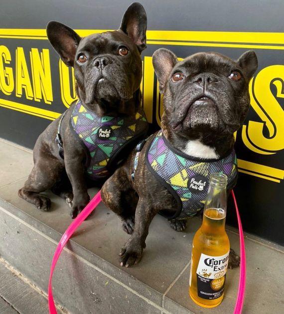 Dog-friendly cafes Hello Sam