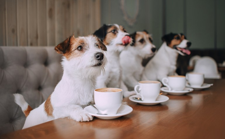 Dog-friendly cafes in Sydney, Melbourne and Adelaide