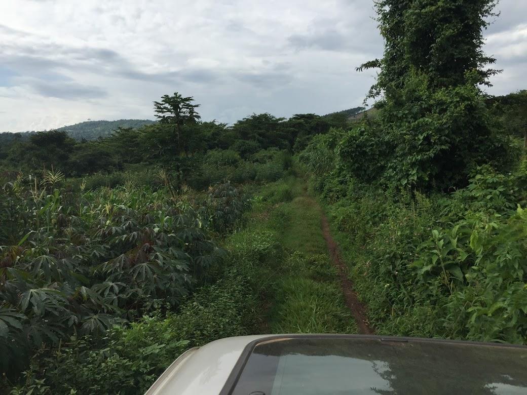 畑到着のすぐ手前、道なき道を行きます