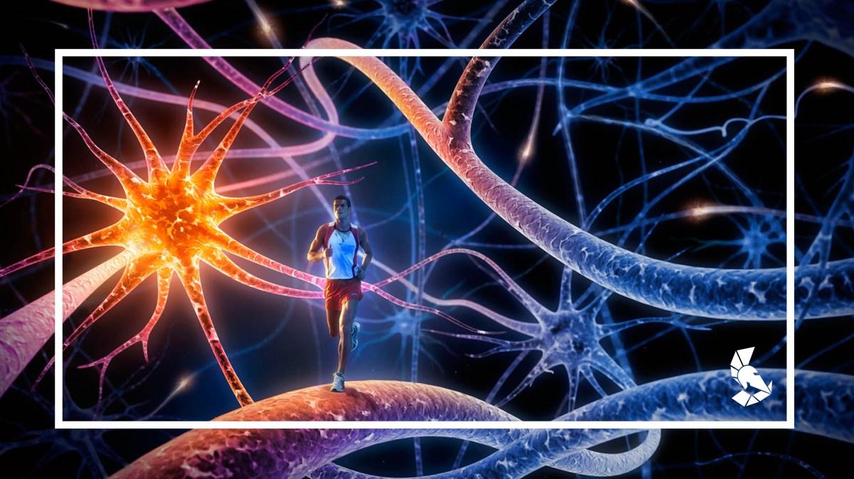 Correr faz o cérebro criar novos neurônios; e levantar peso, não?