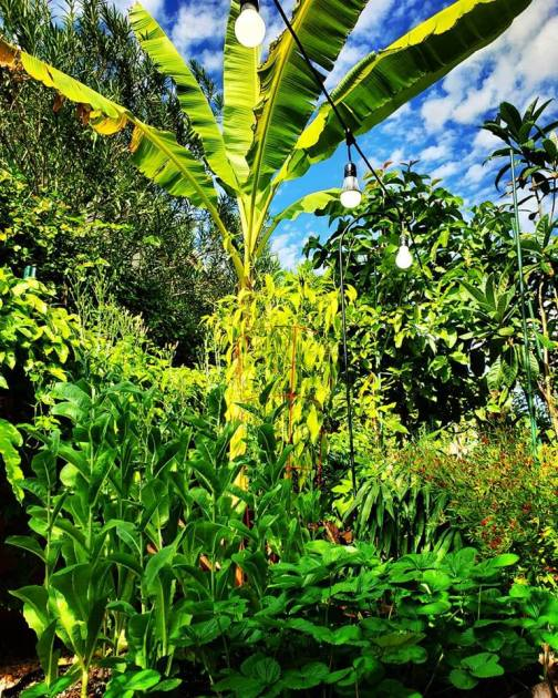 Image shares numerous tropical plants growing