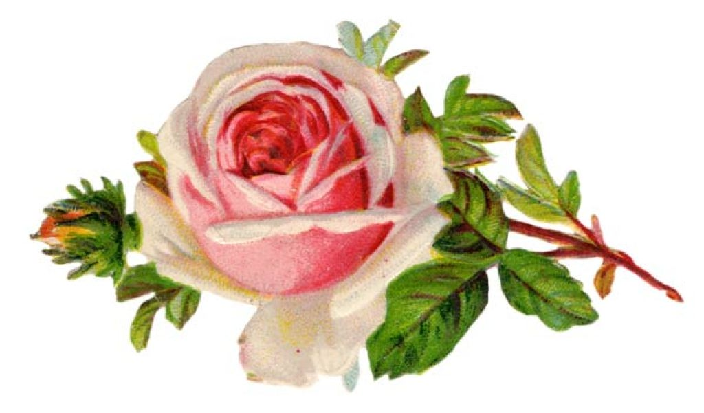 free clipart, free vintage clipart, vintage clipart, vintage rose clipart,