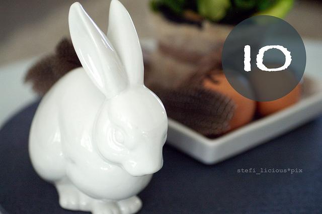 bunny_10