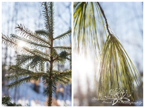 Ottawa Winter Photography Stephanie Beach Photography