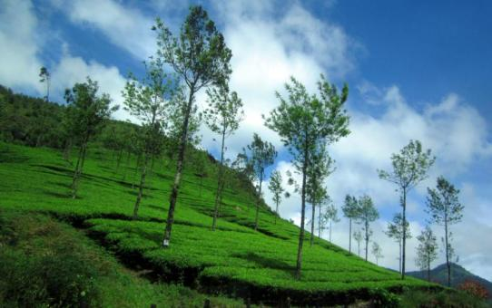 Kerala, the Perfect Monsoon Getaway