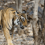 Nature's Playground – Sariska, Part II